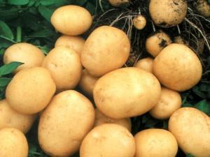 Ранний картофель.