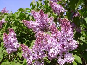 огород в мае - подводим итоги
