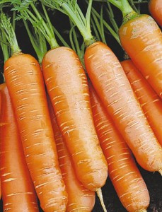 Особенности технологии выращивания моркови.