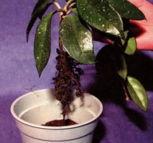 Внимание - корневая система растений.