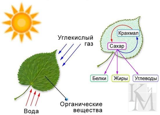 углекислый газ и растения.