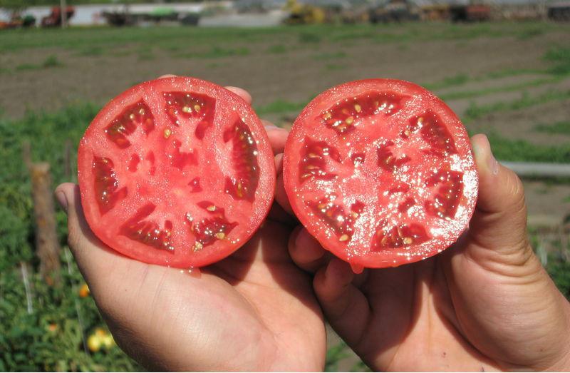 Výsledek obrázku pro помидоры из семян