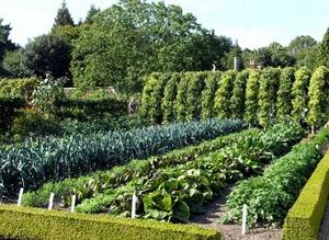 Плановая работа в огороде